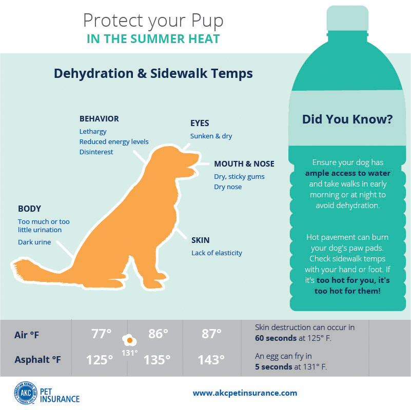 summer heat safety dog paw sidewalks