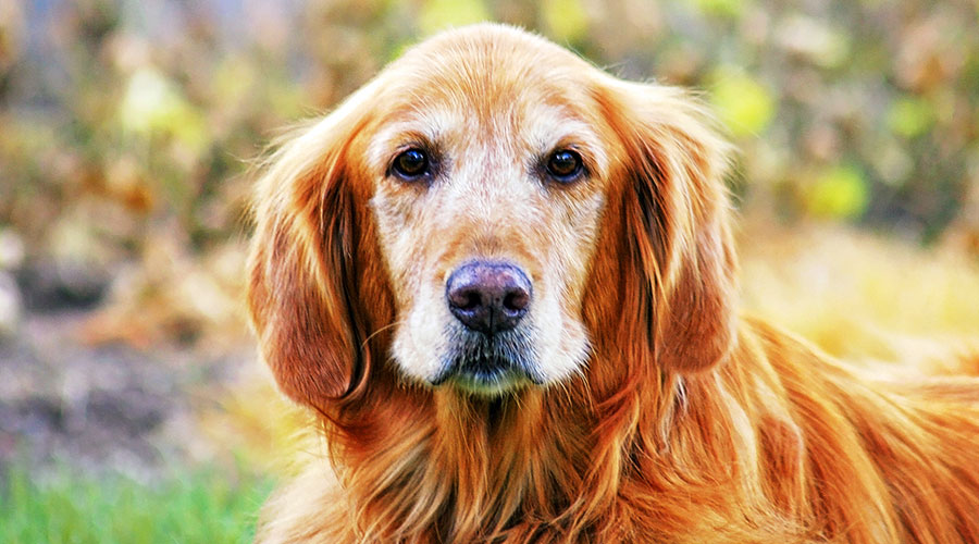 How Can I Tell if My Dog Has Cancer?