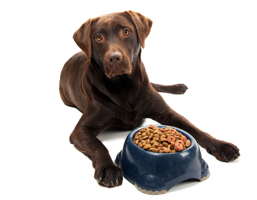 Preventing resource guarding for Akc dog food