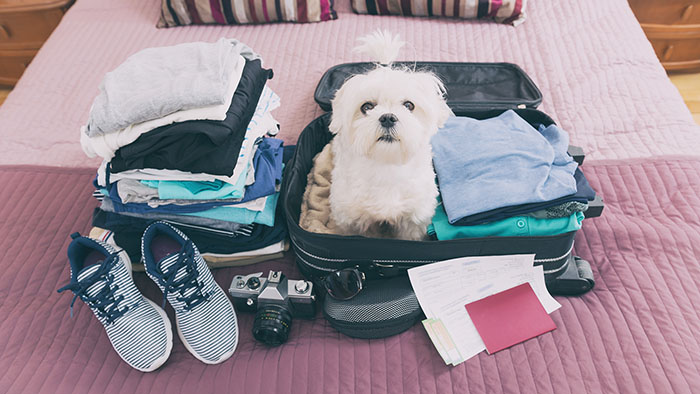 Canine vacation: Packing for your pooch
