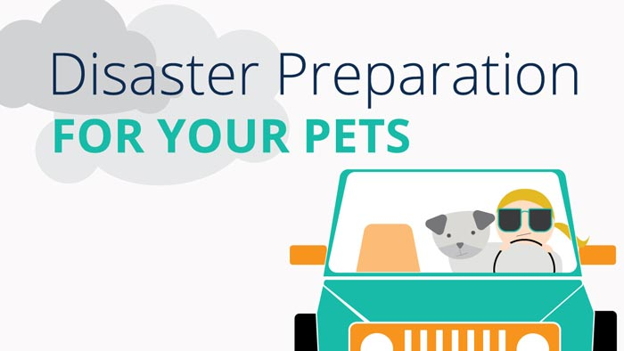 Expect the Unexpected: Prepare a Plan for You AND Your Pet