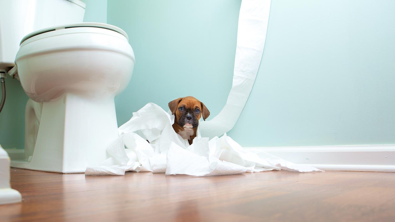 Puppy Housetraining 101