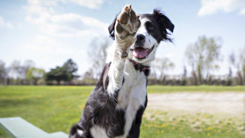 RDO Day: AKC Trick Dog