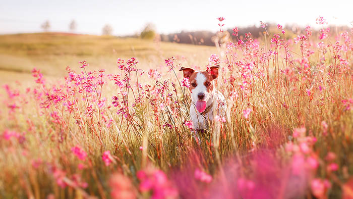 Spring Safety for Your Pup