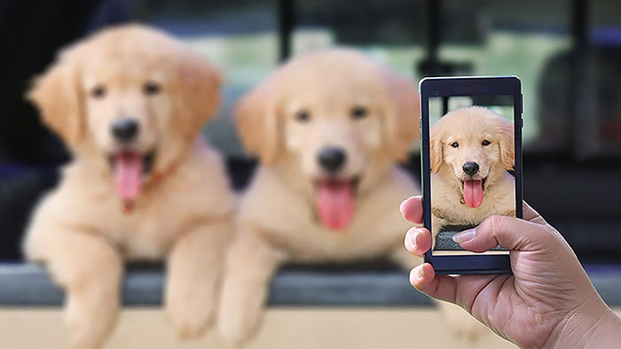 Stay in Touch With Your Breeder - Here's Why!