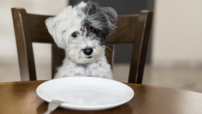 Thanksgiving Recipes with Dog-Friendly Ingredients