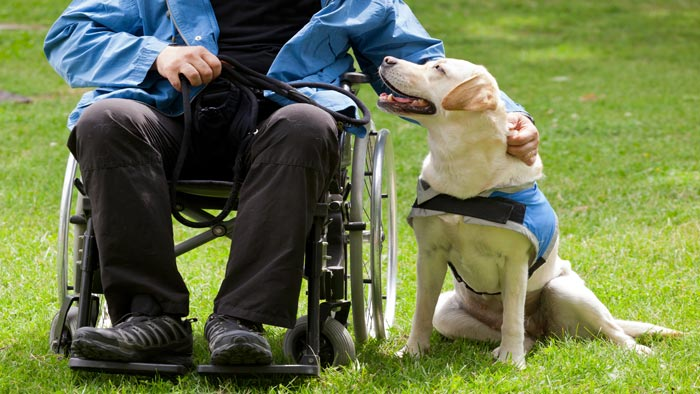The Amazing Crusades of Working Dogs, Therapy Dogs & Service Dogs