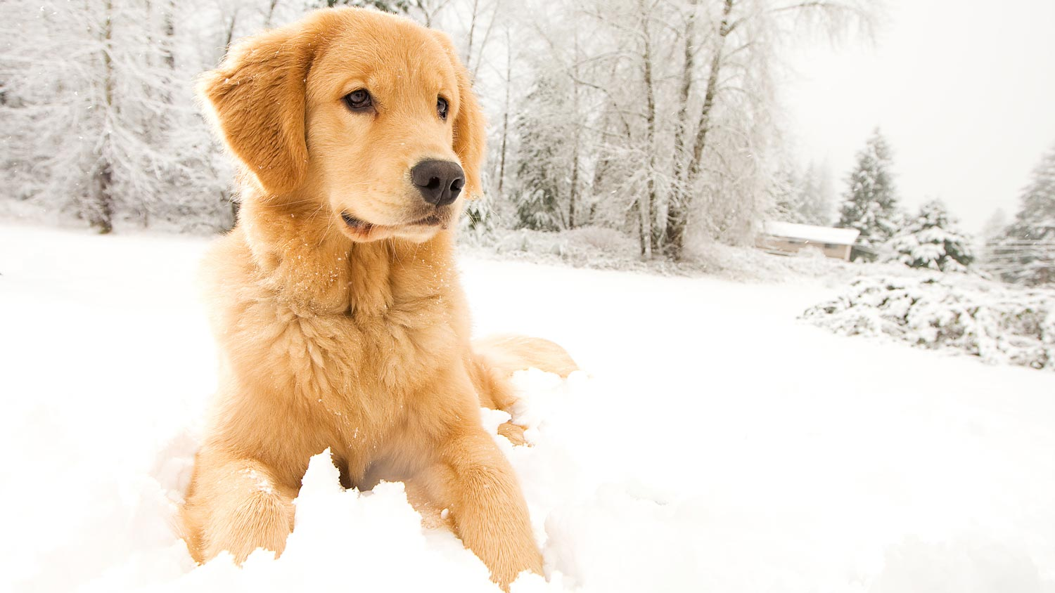 Image result for winter dog pictures