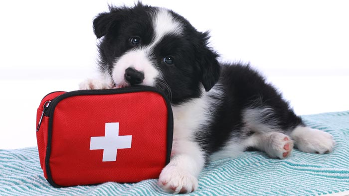 Building Your Pet's First Aid Kit