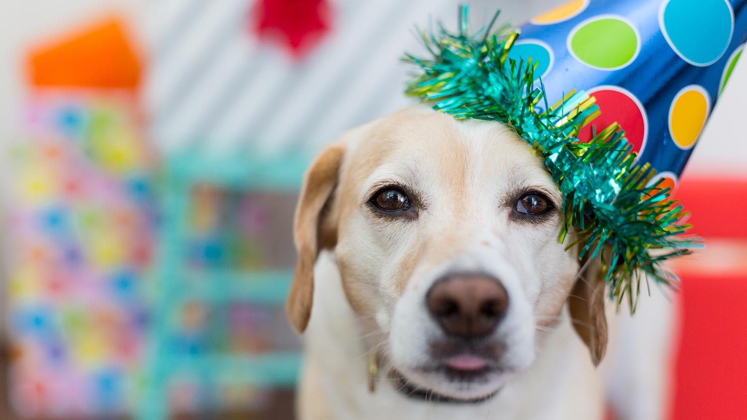 Dog Birthday Presents For All Ages