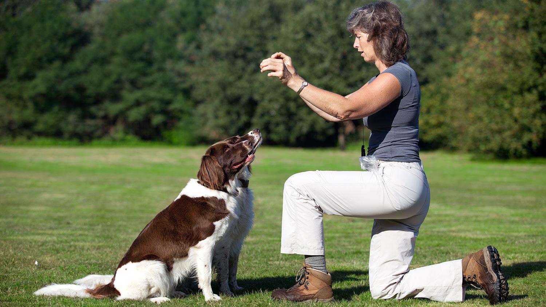 Dog Training Basics: Teaching Fido to Sit foto