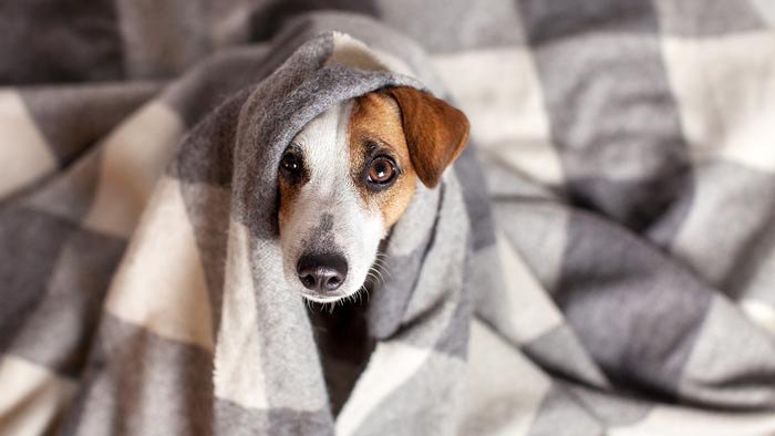 What Do You Know About the Dog Flu?