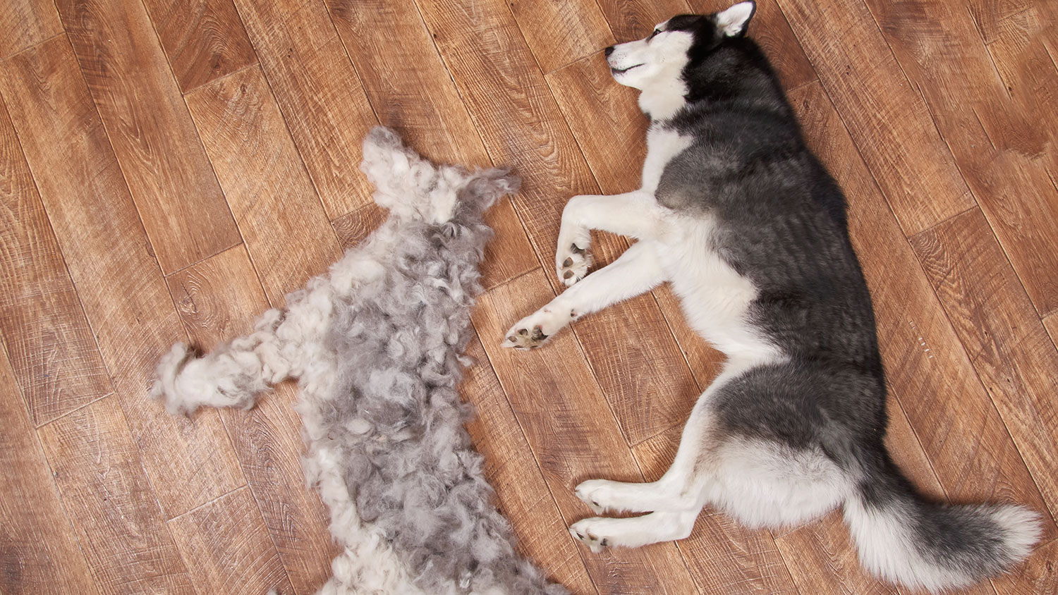 6 Tips to Control Dog Shedding
