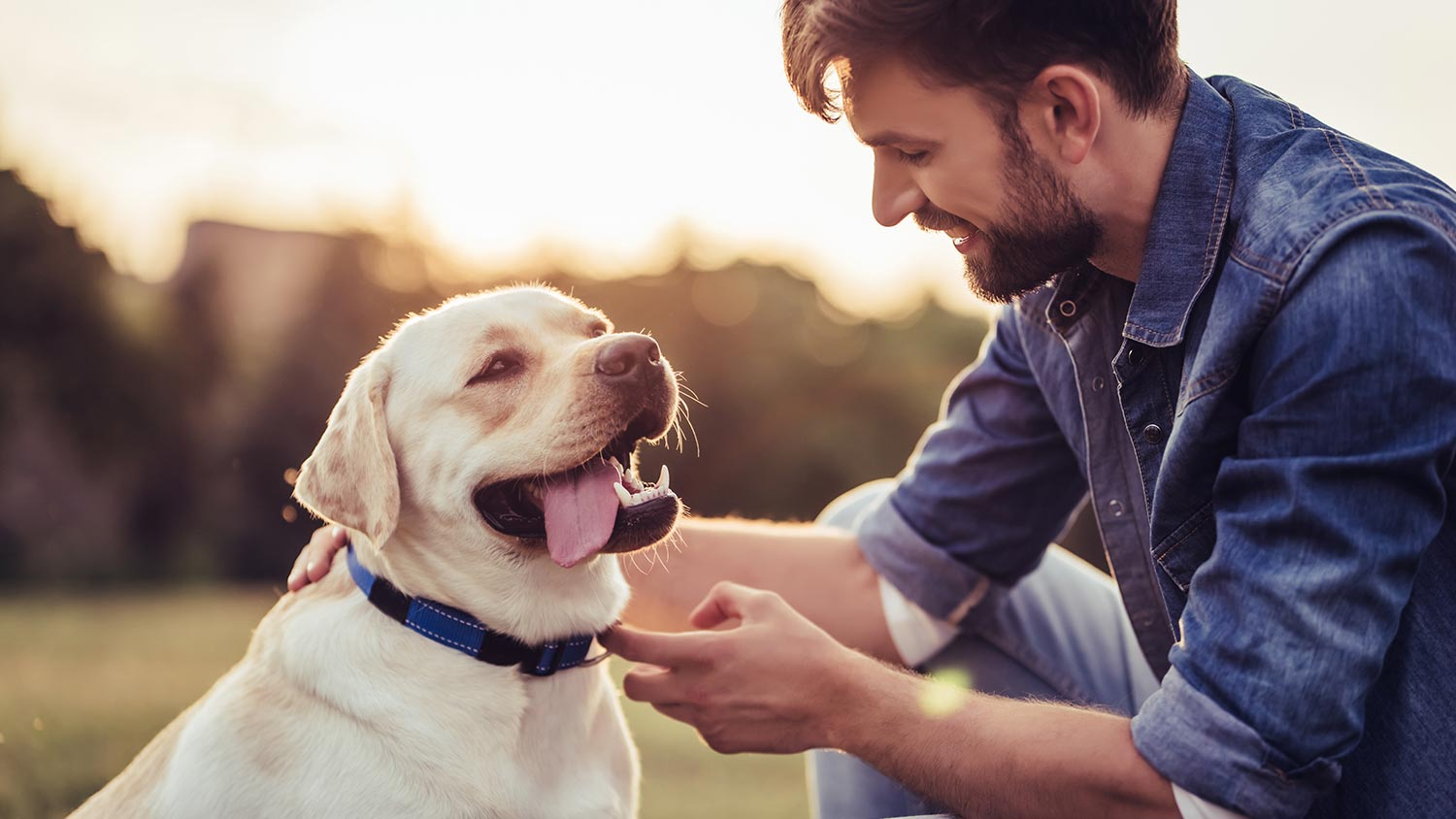 7 Tips for Better Communication with Your Canine