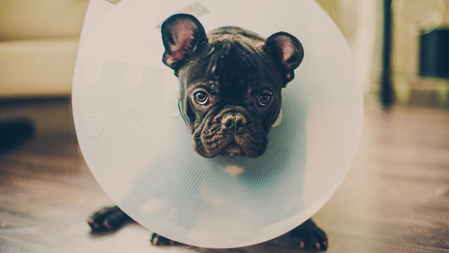 7 Ways to Prevent Canine Injuries at Home
