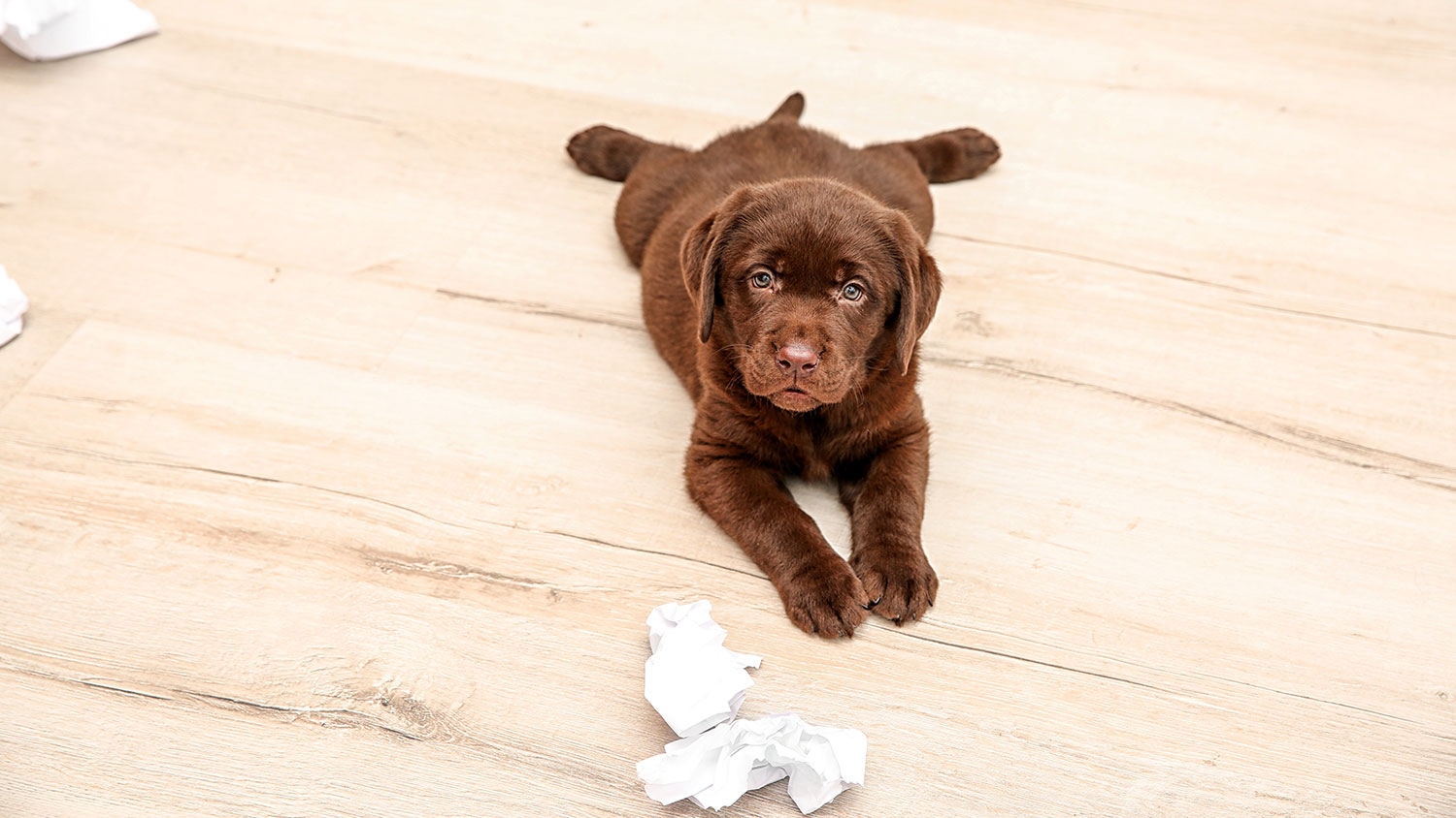 Best Diy Pet Stain Removers