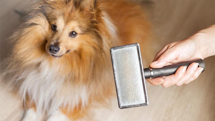 Basic Grooming Skills for Dog Owners