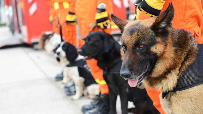Nominate a Canine Hero in Your Community!