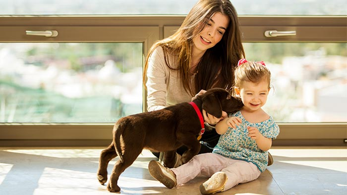 Five Tips for Dog Training as a Family