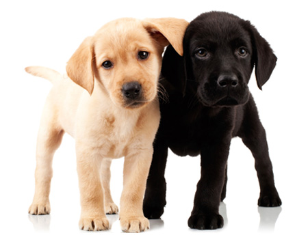 AKC Pet Insurance 30-Day Certificate   Breeder Benefit