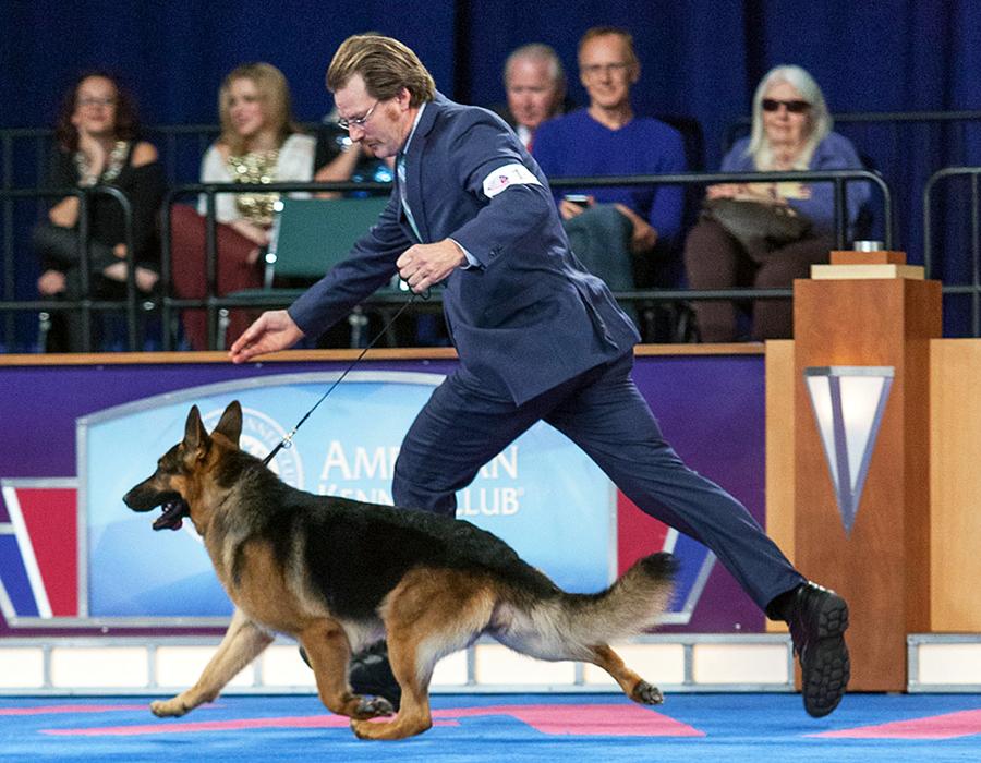 Akc Dog Show Raleigh Nc
