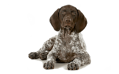 Wellness & Routine Care Coverage | AKC Pet Insurance