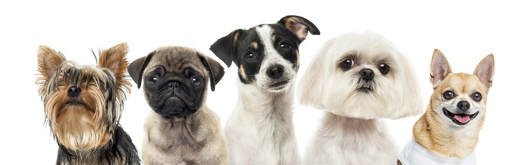 Compare Our Plans | Dog Health Insurance | AKC Pet Insurance